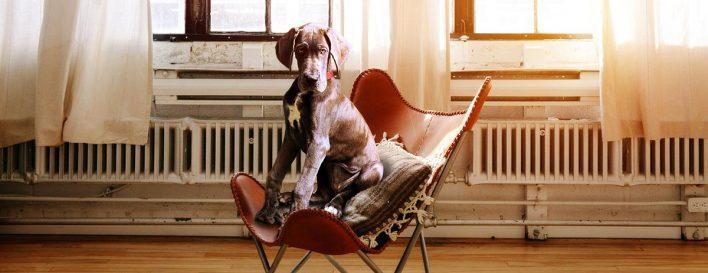 Themenabend - Hilfe ein Hund kommt ins Haus